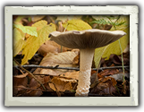 Éducationel